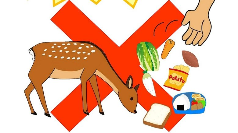 """「奈良のシカは観光客減でも飢えていません」誤解による""""えさやり""""禁止を県が呼びかけ"""