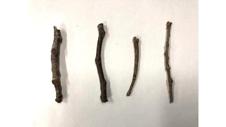 """どう見ても4本の""""小枝""""…「どれが虫かわかりますか?」千葉市動物公園のクイズのレベルが高い"""