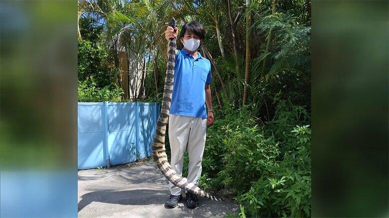 国内初のウミヘビを発見 全長1.7m 重さ3.6kg