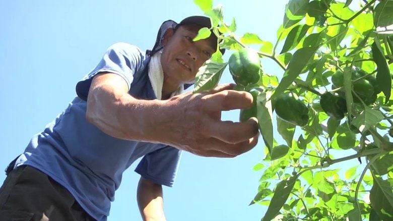 「生きているなら 止まるより前に」 震災後に始めたピーマン農家【岩手発】