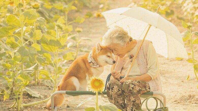 """「心がポカポカだぁ」おばあちゃんと柴犬の""""幸せな瞬間""""にほろり…写真に込めた思いを撮影した孫に聞いた"""