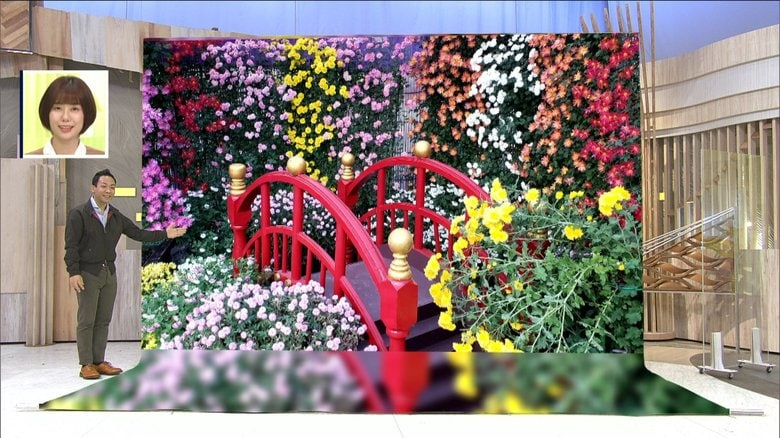 """菊の開花は""""太陽次第""""!? 各地で見ごろ 日本最古の「菊まつり」に都内絶景スポットも"""