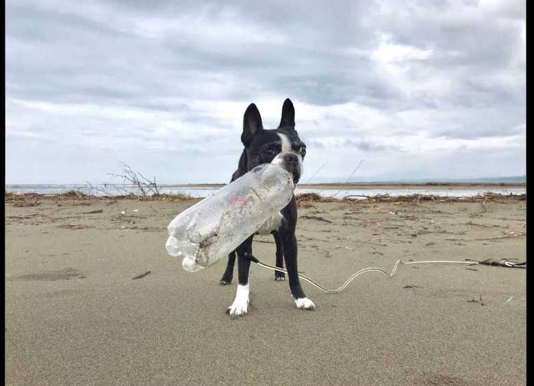 """拾ったペットボトルは3000本超…高知の海岸でプラごみ""""お掃除犬""""が活躍中!"""