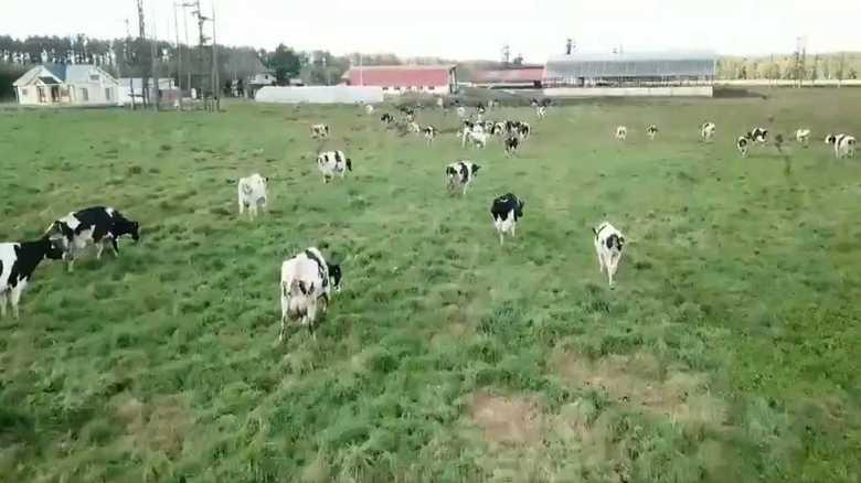 """こんな使い方もあったのか…ドローンが牧場での""""牛追い""""で目から鱗の大活躍"""