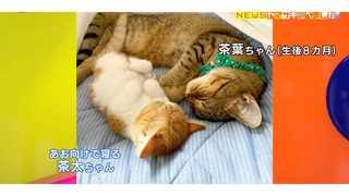 猫 仰向け 寝る