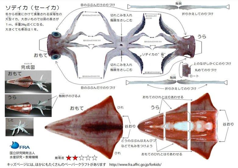 """""""海の生き物""""のリアルなペーパークラフトを無料公開…最高難度はズワイガニ!?おすすめを聞いた"""