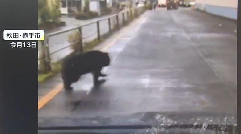 市街地やショッピングセンターにクマが出没…クマに出会った時に注意するポイントとは?