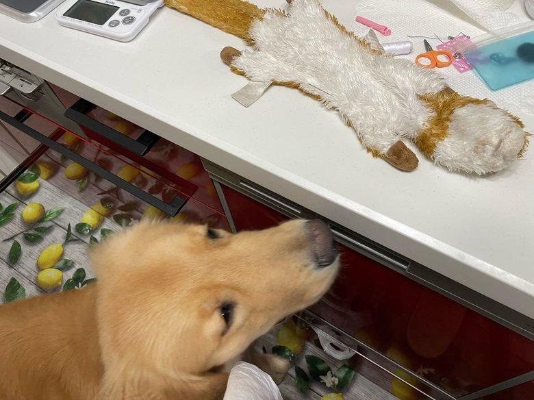 壊れてしまった「お気に入りのおもちゃ」を心配そうに見つめる犬が切ない…その後を飼い主に聞いた