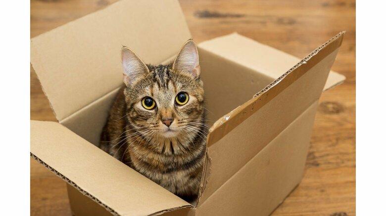 「家の周囲を徹底的に探して」ネコが地震に驚き脱走…獣医師が教える探し方のポイント