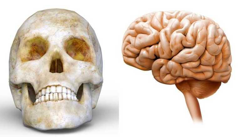 """なぜ?学校にヒトの頭蓋骨と""""脳のホルマリン漬け""""相次ぐ""""本物の人体""""発見の謎"""
