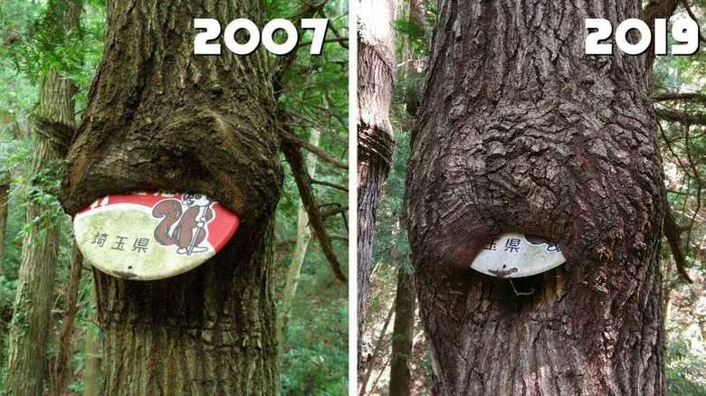 """12年越しの""""看板を飲み込んでいく木""""に5.4万いいね…投稿者のその後【今年私バズりました】"""