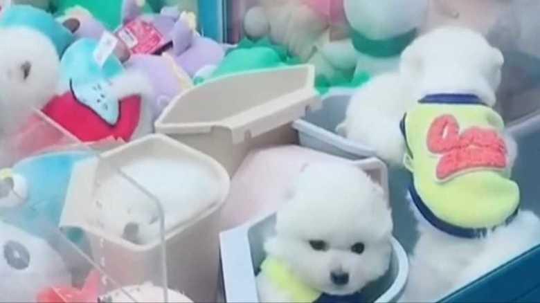 中国の動画が炎上 クレーンゲームの景品に子犬!?動物虐待と非難殺到