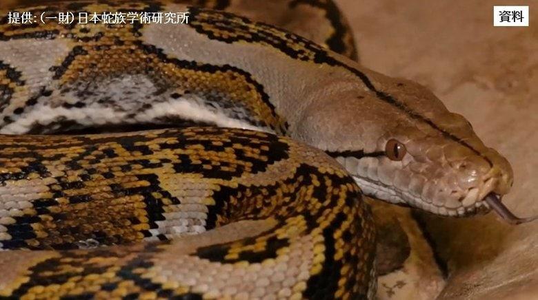 """体長3.5mのニシキヘビが""""逃走中""""  警察犬投入も見つからず"""