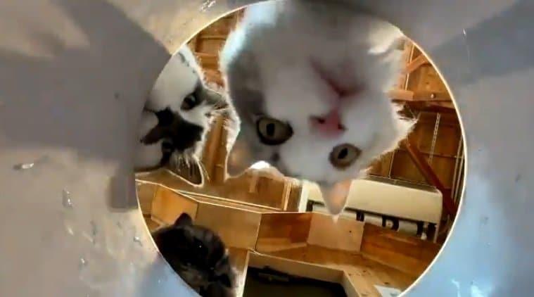 覗きこむ猫たちの視線を独り占め! 長崎バイオパークの「幸せになれるバケツ」に癒される
