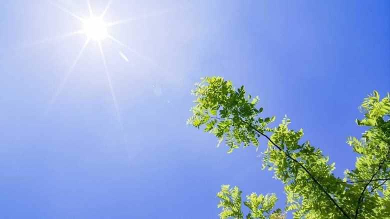 「2100年 未来の天気予報」に衝撃…東京の気温は44℃になる!?