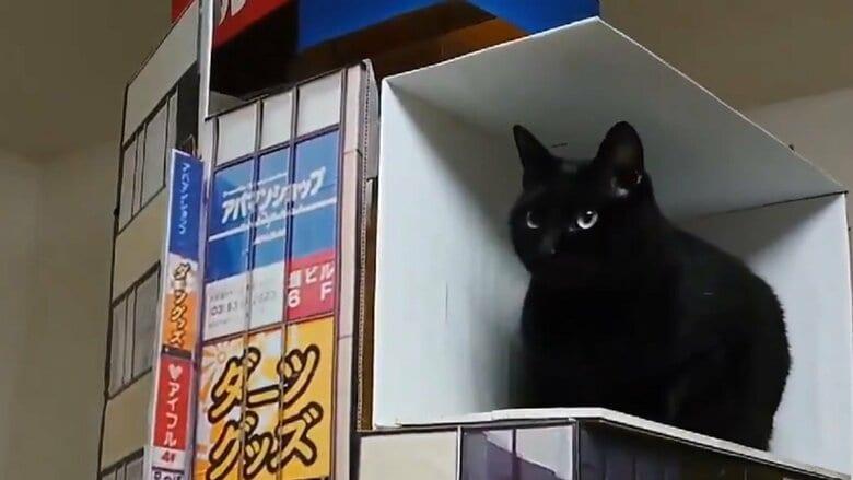 """「かなり飛び出てる」新宿の3D巨大猫を""""うちの巨大ネコ""""で再現…簡単にできる? 作り方を聞いた"""