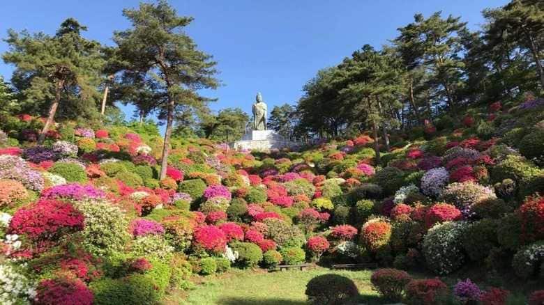咲き誇るツツジを一望…生まれ変わった「花と歴史の寺」