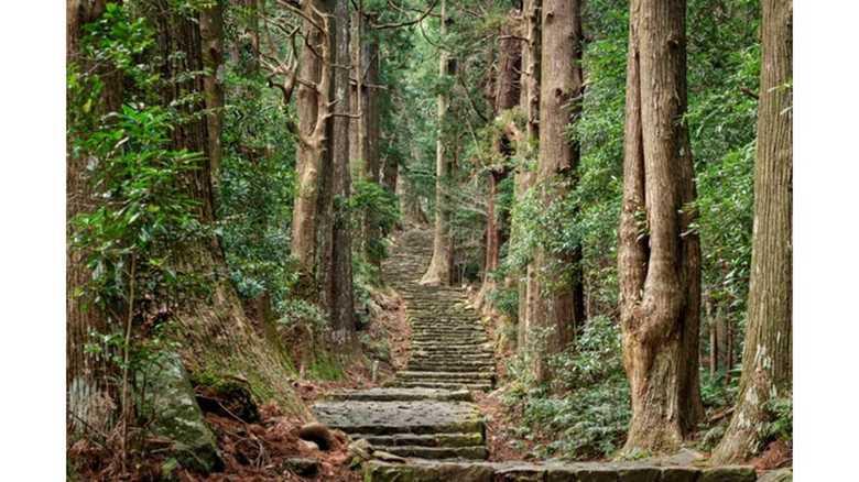 和歌山県熊野が1位に! 2020年外国人が訪れるべき日本の観光地ランキング発表