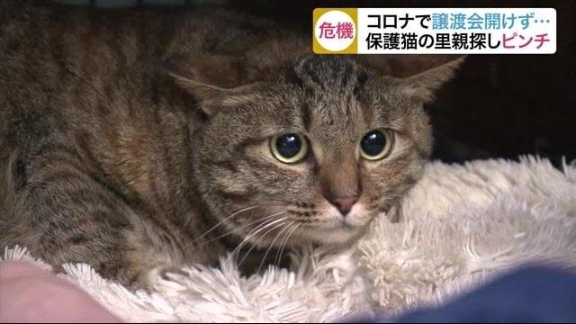「捨てネコを殺処分から救えない!」新型コロナでネコの里親探しが難航【宮城発】