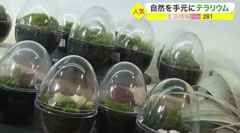 癒される!小さな緑の世界を仕事場や自宅で…ガラスの容器で植物栽培「テラリウム」