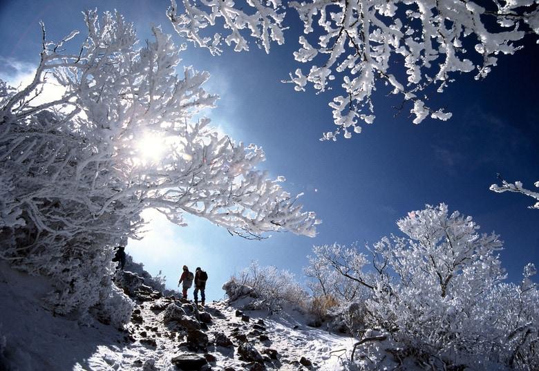 巨大化した「アイスモンスター」も! 真冬の絶景「樹氷」…実は鹿児島でも見られます