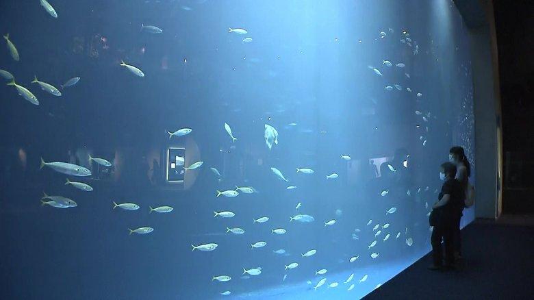 迫力満点の巨大水槽にロマンチックな景色も 子どもも大人も楽しめる四国最大級の水族館