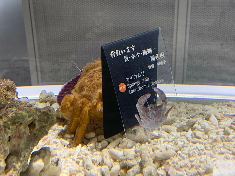 """貝殻を背負う習性の「カイカムリ」が選んだのは自分の""""解説板""""…なぜ気に入ったのか生態を聞いた"""