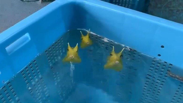 """「水を吹くフグ」の動画にほっこり…""""水吹き""""の理由を水族館と専門家に聞いた"""