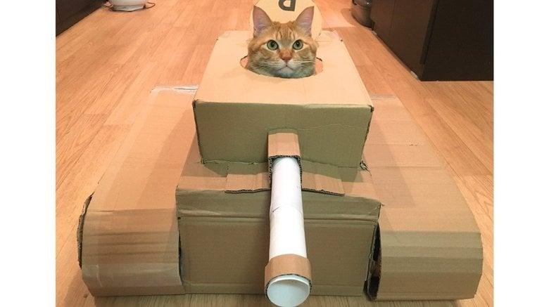 夫が段ボールで作った「猫戦車」が可愛い…いい表情だが気に入ってくれたのか聞いた